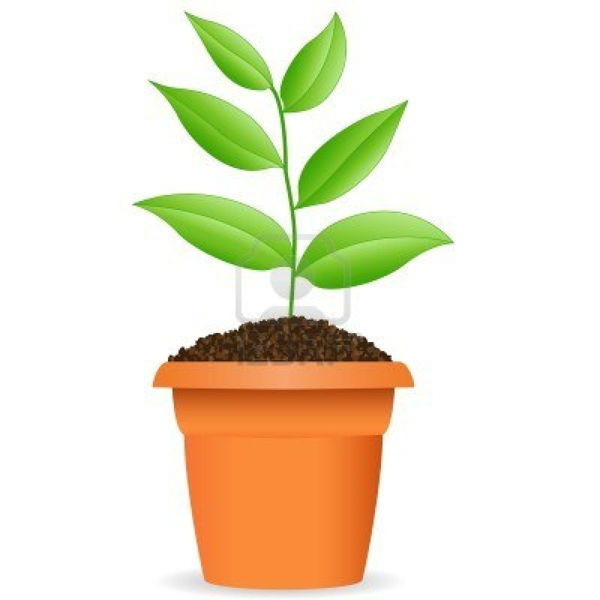 The plant in the pot philippine theo law gee for Plante en pot